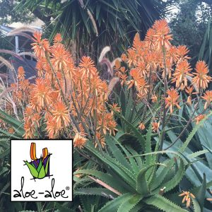 Aloe-Copper-Showers